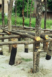 The house frame was built by mounting crossbeams on the support poles. Other horizontal poles or spars were positioned perpendicularly on these so as to lend more rigidity to the structure.