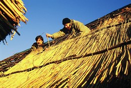 Realizzazione del tetto mediante la sovrapposizione di fasci di canne palustri disposti a scala, fermati da rami legati ai correnti con l'utilizzo di un grande ago in legno